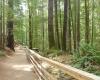 Elk Falls trail suspension bridge BC Parks Best hiking