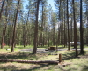 Camping Okanagan  BC Parks  Kettle River Boundary Country